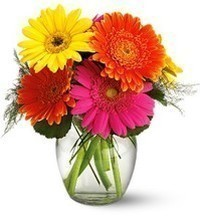 Vase of bright colours gerberas